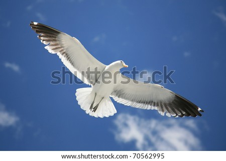 Seagull with spread wings flying against a blue sky