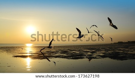 seagull with sun set