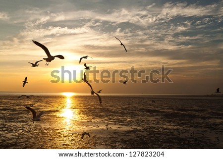 seagull with sunset in the background