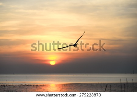 Seagull with sunset in the background (sunrise, beach, sunset)  - stock photo
