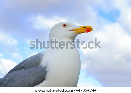 Seagull with yellow beak on the background of blue sky - stock photo