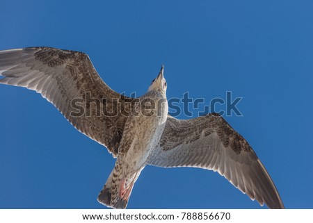Seagulls against the blue sky .