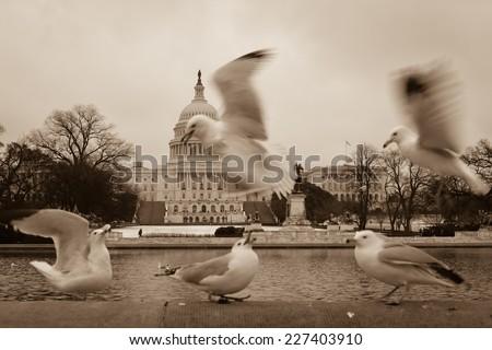 Seagulls and Capitol Building - Washington DC, USA  - stock photo