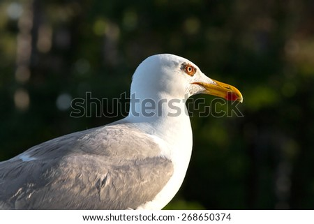 Seagulls are birds in the family Laridae