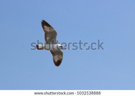 Seagulls are flying in the air, blue sky's backdrop, freedom concept.
