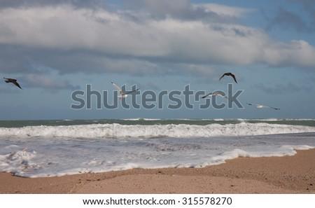 seagulls at  a surf beach on a windy day, Gisborne, East Coast, North Island, New Zealand  - stock photo