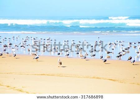 Seagulls at the beach near the atlantic ocean - stock photo