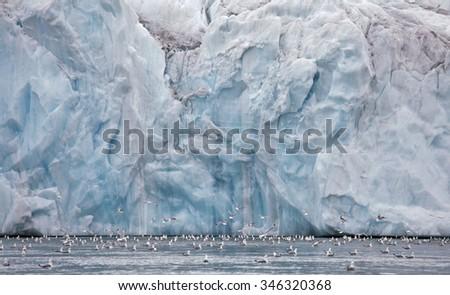 Seagulls feeding near glacier wall (Franz Josef Land)  - stock photo