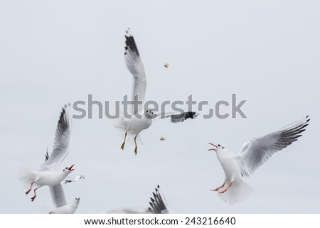 Seagulls Fighting for the Food at city background - stock photo