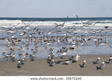 Seagulls flock at the Atlantic Ocean shoreline in Daytona Beach, Florida - stock photo