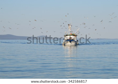 Seagulls Flock Flying Around A Fishing Boat