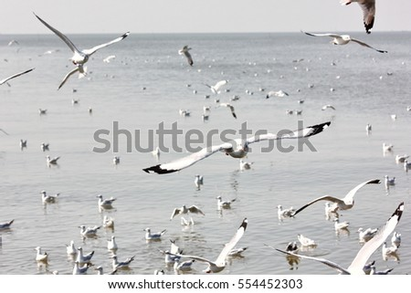 seagulls fly with seagulls relax background