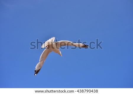 seagulls flying  - stock photo