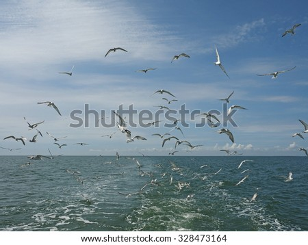 Seagulls flying above the boat tail