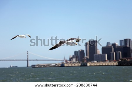 Seagulls flying along the San Francisco Bay - stock photo