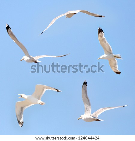 Seagulls flying among blue sky - stock photo