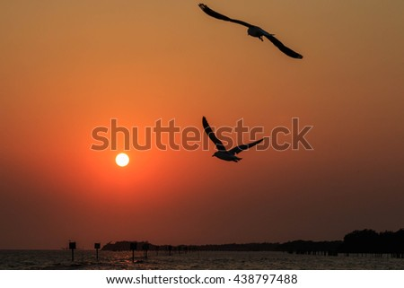 Seagulls flying at sunset .
