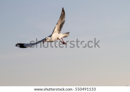 Seagulls flying at the sunset sky background