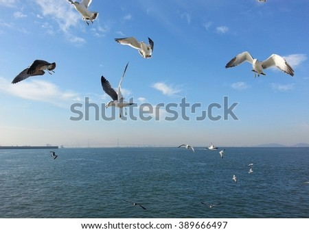 Seagulls flying closely to a ferry at Wolmido near Incheon.