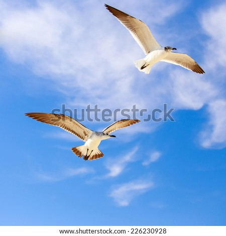 Seagulls flying high against the background of blue sky - stock photo