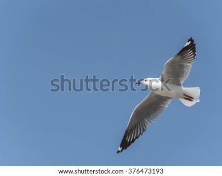 Seagulls flying on a blue sky. Horizontal format with copy space on the left side.
