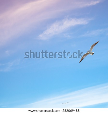 Seagulls flying on bright cloudy sky background, colorful tonal correction filter - stock photo