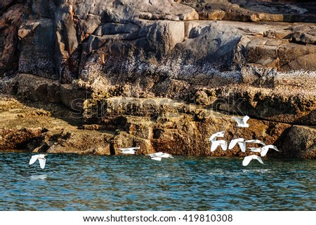 Seagulls flying on sea surface at Con Dao Island, Vietnam