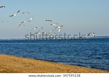 seagulls flying over the ocean