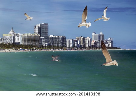 Seagulls flying over the ocean at Miami Beach. - stock photo