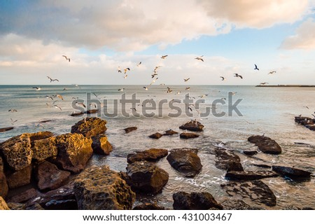 Seagulls flying over the water and stones near the Atlantic ocean coast in the sunset time in Portugal