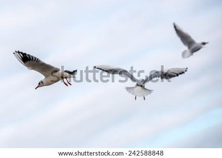 Seagulls in Orlowo district in Gdynia, Poland - stock photo