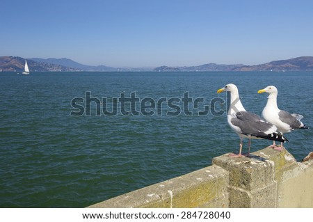 Seagulls in the bay of San Francisco, United States. - stock photo