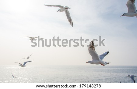 Seagulls in the sea - stock photo