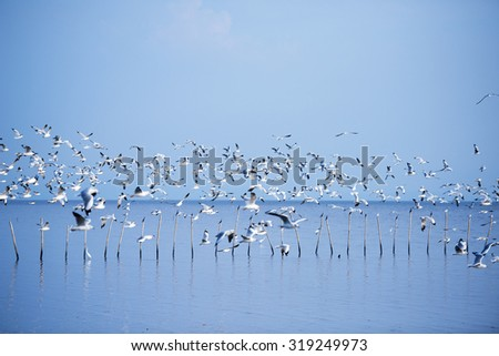Seagulls in the shore