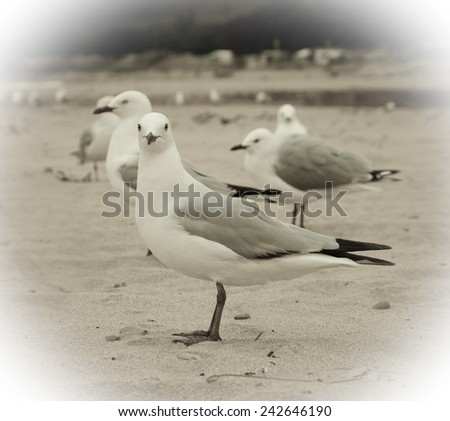seagulls on a beach  - stock photo