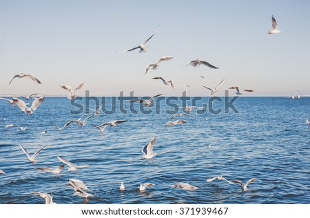 seagulls on a beach in the evening
