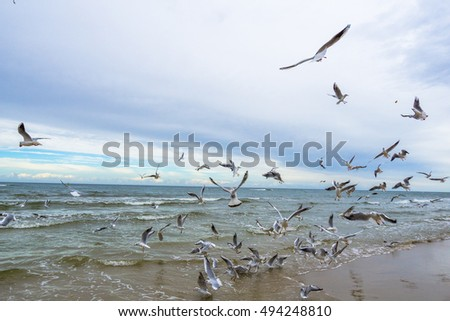 Seagulls on a beach waterfront