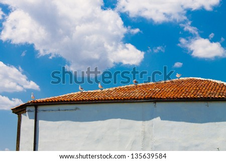seagulls on roof of house on  blue sky background