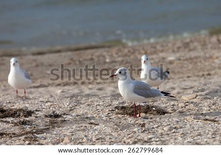 Seagulls on sea beach at sun day - stock photo