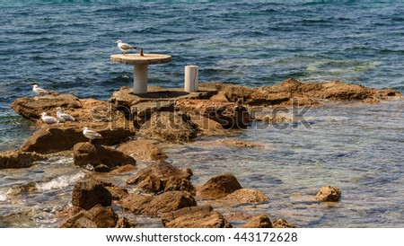 Seagulls on the boulders - stock photo