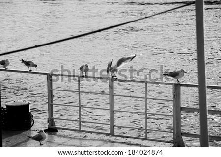 seagulls on the rail - stock photo