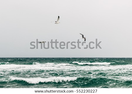 Seagulls over the sea on a cloudy day, minimalistic landscape