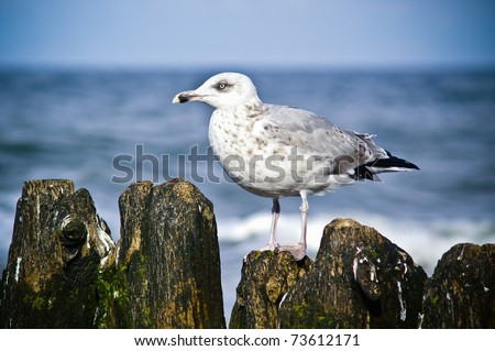 Seagulls perched on the breakwater, Baltic Sea. - stock photo