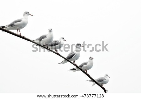seagulls ready to fly in the sky