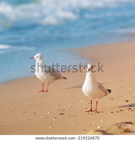 seagulls, sea and sandy beach - stock photo