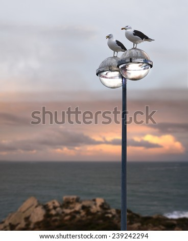 Seagulls silhouettes on a lamp, coastline in France, near the Atlantic