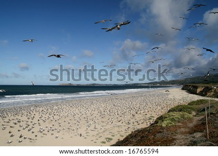 seagulls taking over the beach - stock photo