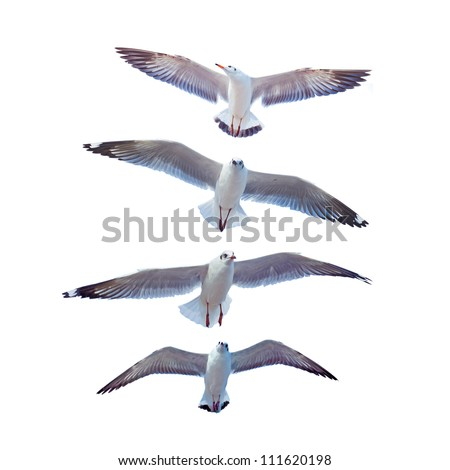 Seagulls up vertically. - stock photo