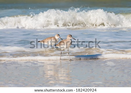 Seagulls walking at the beach with waves splashing in the background - stock photo