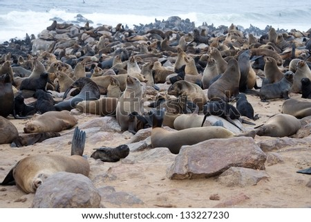 Seal colony in Namibia - stock photo